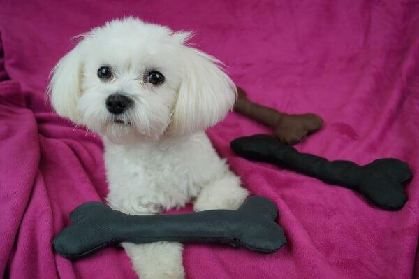 kostka zabawka gryzak dla psa LOVEDOG