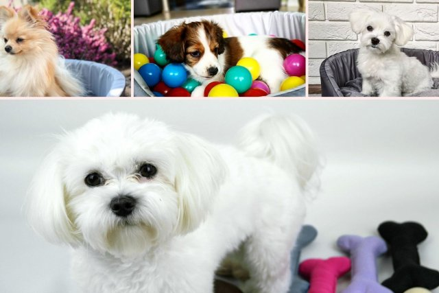 legowiska dla psów lovedog